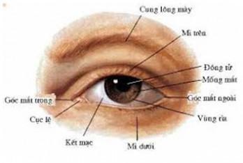 Cấu tạo mắt và cơ chế hoạt động của mắt
